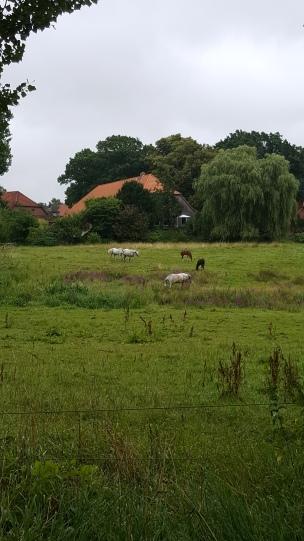 Pferde sind gerade der absolute Renner: das Landkind möchte sie am liebsten den ganzen Tag streicheln. Fast jeden morgen geht es deshalb zur großen Weide..