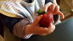 Das Landkind ist begeistert von seinen ersten Erdbeeren - davon werden in diesem Jahr noch einige vernascht..