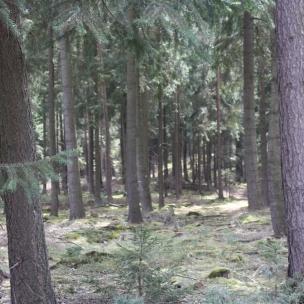 Der anliegende Wald beherbergt verschiedene Nadelbäume.