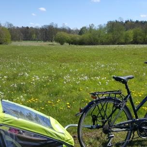 Bei Sonnenschein mit dem Rad durchs Grün - herrlich!