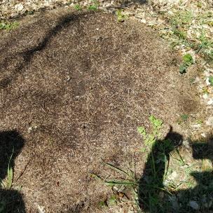 Die Ameisen sind bei dem herrlichen Wetter auch schon ganz fleißig.