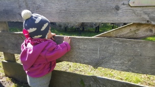 Das Landkind musste noch einmal schauen wie es dem kleinen Lämmchen geht..