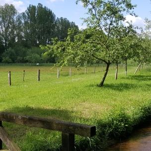 Die Rieselwiese zwischen Suderburg und Räber zeigt die spannende Idee einer Düngetechnik, welche die Bauern der Region einst reich und berühmt machte..