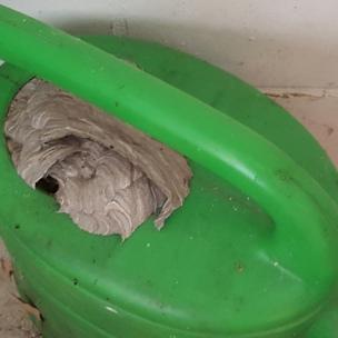 Na sowas, in der Gieskanne haben sich die Wespen eingenistet.