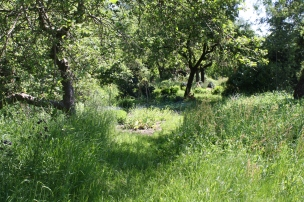 In Oma Lenchens Bauerngarten kann man wunderbar durch das hohe Gras toben..