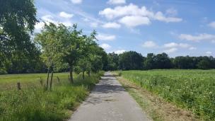 Die Apfelbaumallee gehen wir oft hinunter, hier wachsen die Geburtsbäume der Dorfkinder - eine schöne Tradition.
