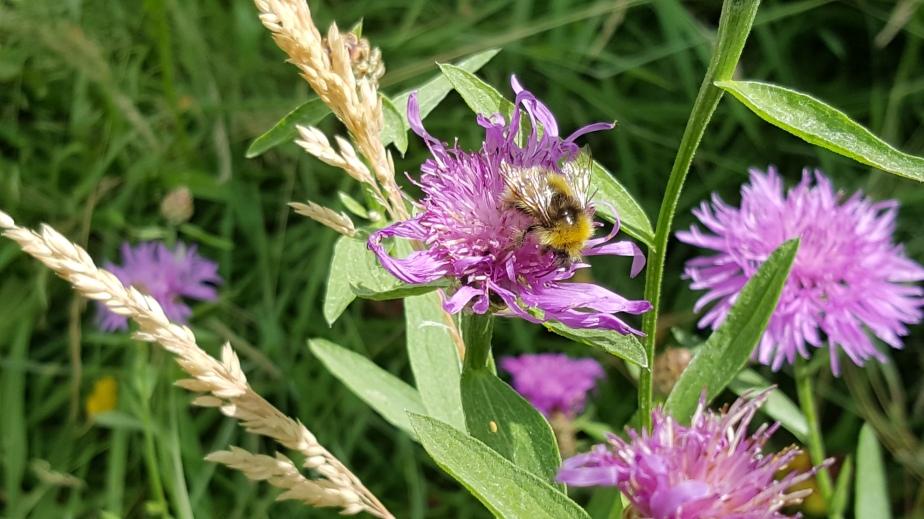 Die schönsten Feld- und Wiesenblumen – in 9Bildern