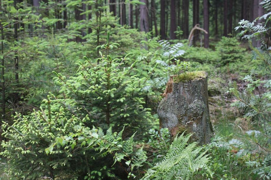Neben der Kunst lässt sich die Waldidylle genießen..