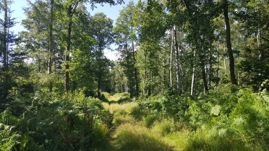Sommerwald – in 9Bildern
