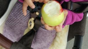 Die ersten Äpfel schmecken immer am Besten!
