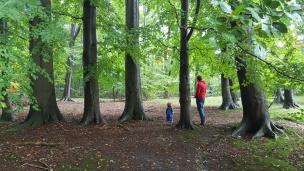 Unter den großen Buchen scheinen das Waldkind und der Herr Papa ganz klein!