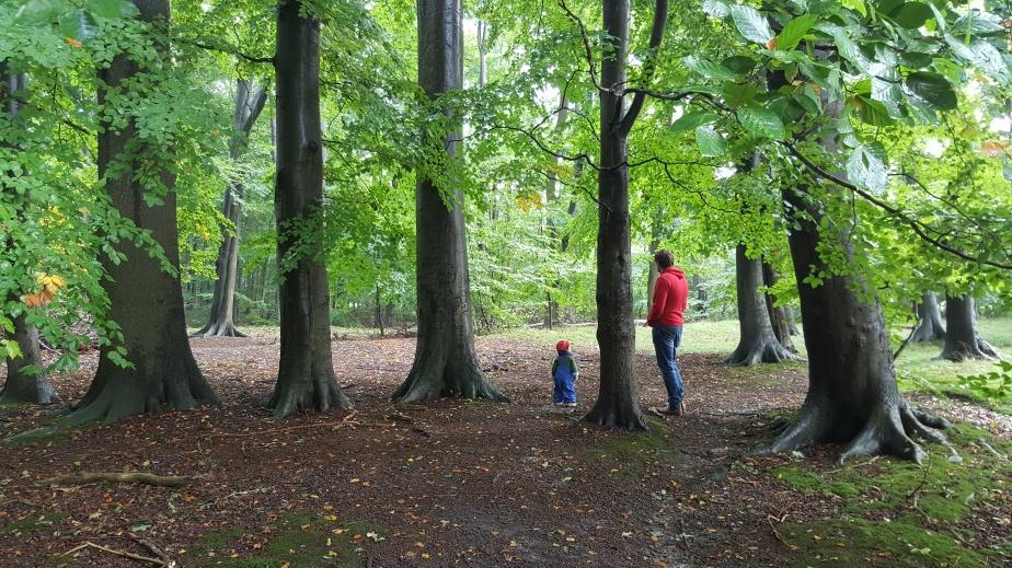 Herbst-Wald – in 9Bildern
