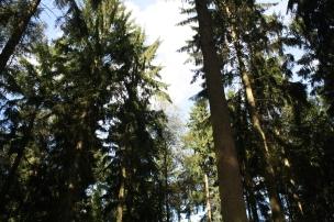 Das Landkind schaut erstaunt in die Baumkronen, gen Himmel..