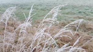 Die Gräser am Wegesrand wiegen sich kaum noch im Wind, sie sind überzogen von kleinen glitzernden Eiskristallen..