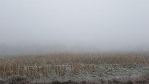 Winter-Nebel erstreckt sich über die Felder und Wiesen, Rehe kreuzen unseren Weg.