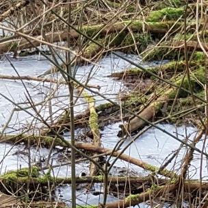 Das Wasser auf den Auen ist gefroren. Wir wünschten, wir könnten auf einem naheliegenden See Schlittschuh laufen.