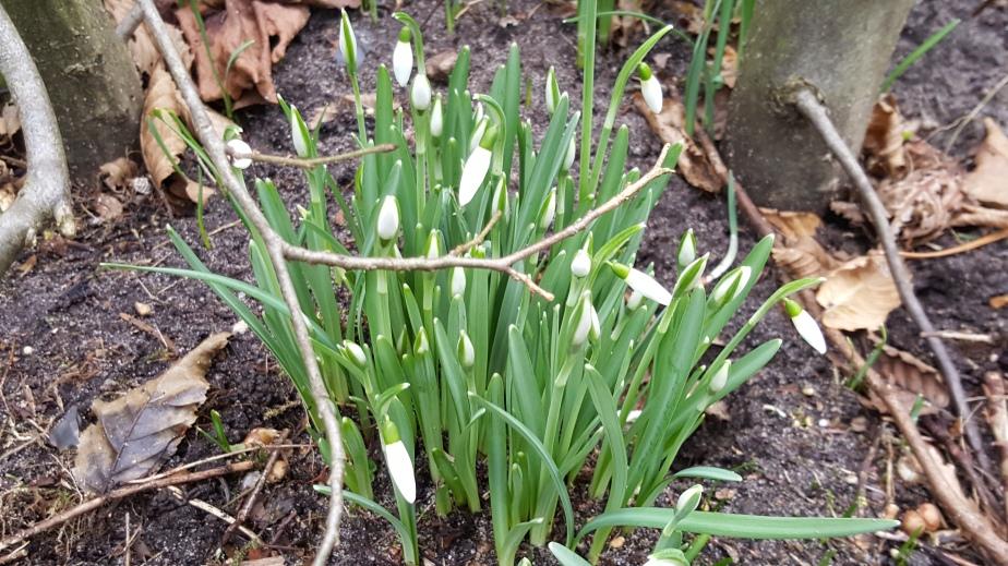 Kleiner Frühlingsgruß