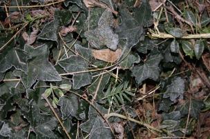 Beim Gang über den Winterboden knistert es, die kleinen Eiskristalle zerspringen unter unserer Last.