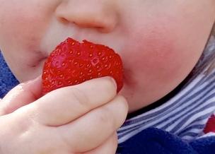 Köstliche rote Erdbeeren, daran kann das kleine Landkind nicht vorbei huschen ohne zu kosten..
