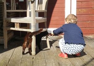 Die kleine Katze lässt sich gerne kraulen.