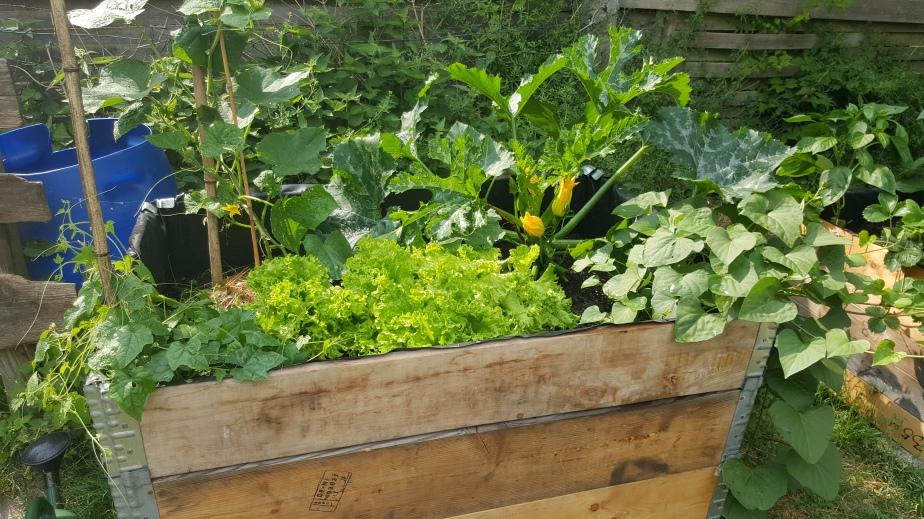 Umweltfreundlicher Sommergarten