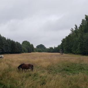 Morgens, wenn noch alles still ist im Dorf, lauschen wir in die Ferne hinein.