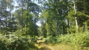 Der Wald kleidet sich in sattem Grün.