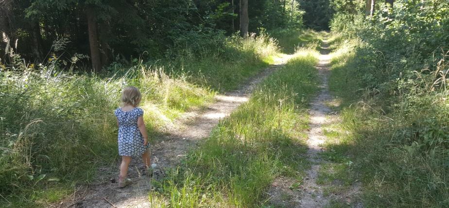 Zwischen Wald & Wiese – in 9Bildern