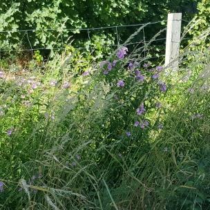 Blumen werden von uns besonders gern begutachtet und Zuhause dann geschaut, um welche Pflanze es sich handelt.