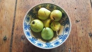 Unsere Birnen sind reif, sie sind recht klein, aber schmecken dem Landkind besonders gut..