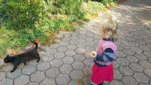Dieses kleine Kätzchen ist uns zugelaufen. Nun begleitet sie uns nahezu durch jeden Tag..