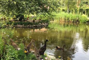 Die Enten haben es dem landkind besonders angetan!