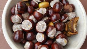 Viele viele Kastanien gibt es in diesem Jahr. Wir können täglich unzählige im Hof sammeln und sie für herbstliche Basteleien verwenden.