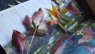 Wir haben viele bunte Blätter gesammelt, gepresst und getrocknet. Danach wurden viele schöne herbstliche Dinge gebastelt und Blätter-Girlanden aufgehängt.