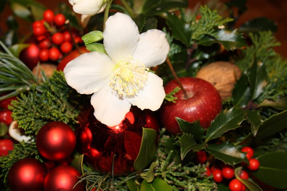Unter dem Weihnachtsbaum..