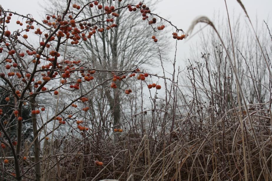 Ein kleines bißchen Winter – in 9Bildern