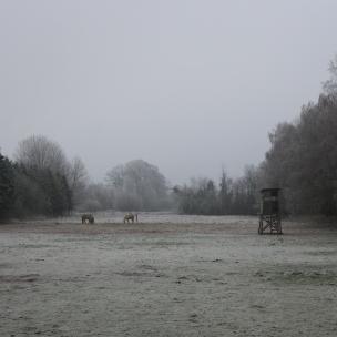 Herrlich, diese winterliche Stille..