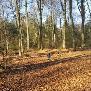 Welche ein Glücksgefühl - endlich wieder Wald-Spaziergänge mit blauem Himmel und Sonnenschein